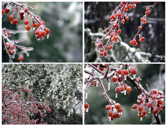 Ice Berries by kahl