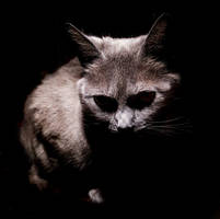dark cat by Ox1tO