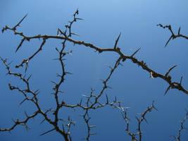 Thorny Branches Stock by Foxytocin