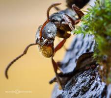 The Ant Face by felixheru