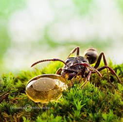Little Life for Little Ant by felixheru