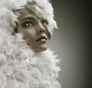 angel feather by felixheru
