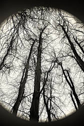 Tree Line IV by dylanridley