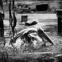 splash by dylanridley