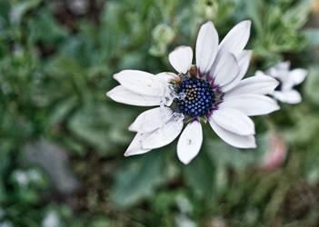 Ice flower by digitalxdefiant