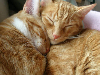 Kitty Love by PepstarsWorld