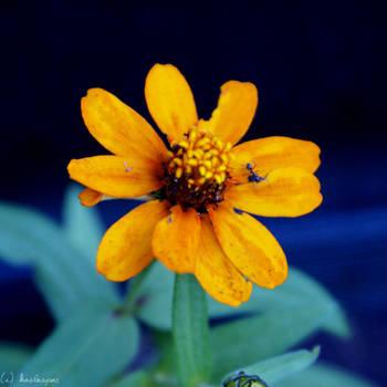 things that rhyme with orange by kaelaspaz
