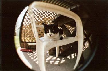 little kitty by kaelaspaz