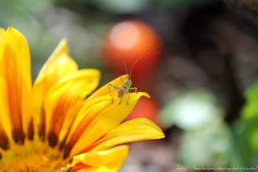 Jiminy. by kaelaspaz