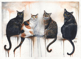 4 Cats by bcduncan