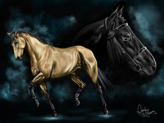 Dressage horse by Shadow1305
