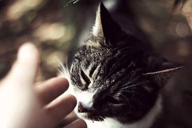 Kittycat by nasal