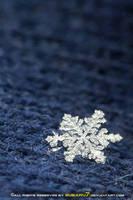 snowflake's memories 1 by Subaru7