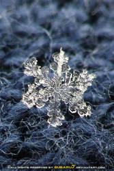 snowflake's memories 2 by Subaru7