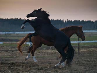 horses by aramisaramis