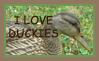 I Love Duckies Stamp by Tangerineandpuce