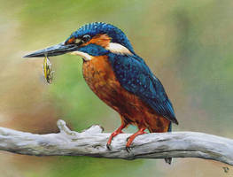 'Kingfisher' by Rpriet1
