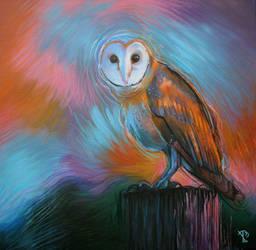Barn owl by Rpriet1
