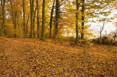 autumnal cover by marlene-dietrich