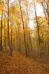 golden path by marlene-dietrich