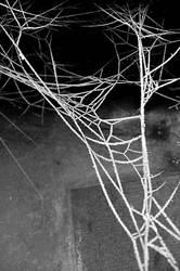 spyder by marlene-dietrich