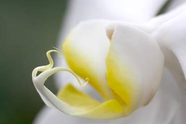 yellow eyed by marlene-dietrich