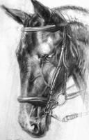 Charcoal Horse Head by Manzanedo