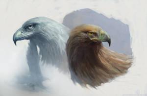 Golden eagle by Manzanedo