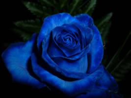 blue beauty by Sadira22
