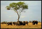 Elephant Herd by Leeuwtje