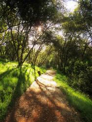 Hidden Path by misskirahast