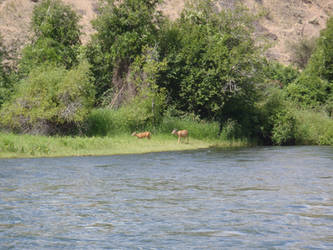 Deer by the River by desuran