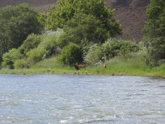 Deer by the River 2 by desuran