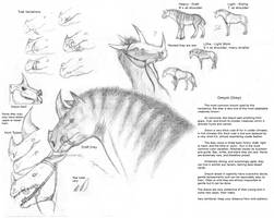 Dreyst - Breed Sheet I by TalonV