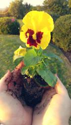 Flower by Tuna-Patty