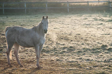 Horse in Cold Field at Sunrise by happeningstock