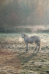 Horse in Cold Field at Sunrise, Vertical by happeningstock