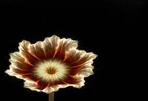 Apo flower 3 by IngaMonica