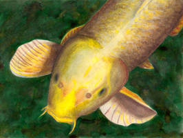 Oil Pastel Fish by jr181