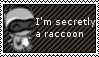 Secretly a Raccoon by MariKatzuki