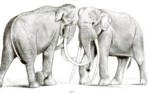 The Largest Elephants Head to Head by Jagroar