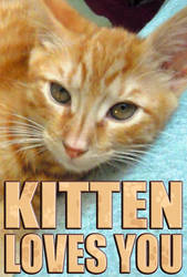 Kitten Loves You by Rogue-Ranger
