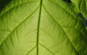 Leaf 2 1920x1200 by biffexploder