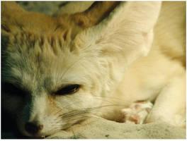 Fennec Fox by Rosselanor