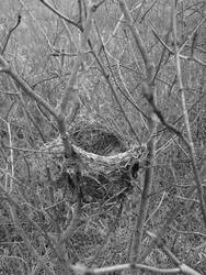 Abandoned Nest by A-Negative-Blood