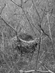 Abandoned Nest by A-Negative-Blood