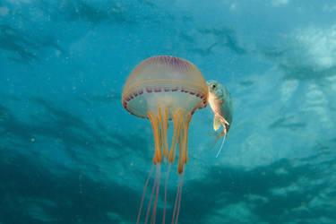 Mauritius dive2 by riba