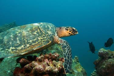 Mauritius dive3 by riba