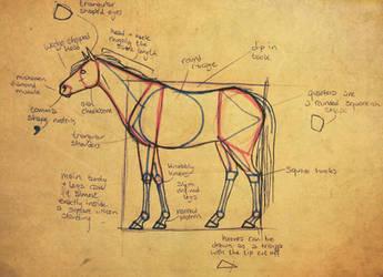 BASIC HORSE ANATOMY by vyxe