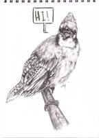 Oh look a bird by Klissie
